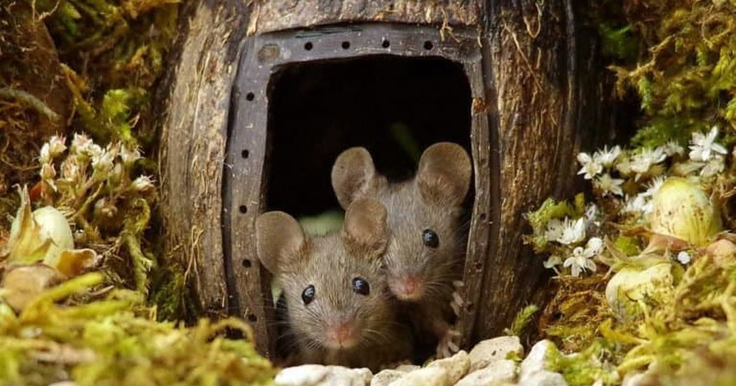 Man Spots A Family Of Mice In His Garden So He Builds Them A Miniature Village