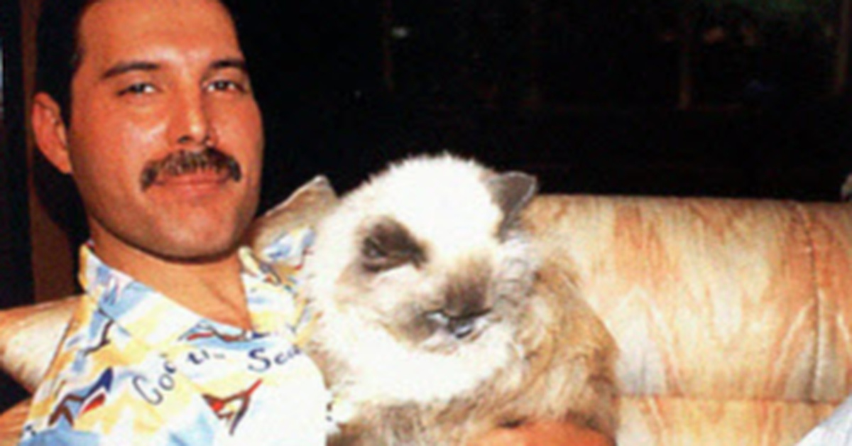 20 Pics That Show How Much Freddie Mercury Loved His Cats And