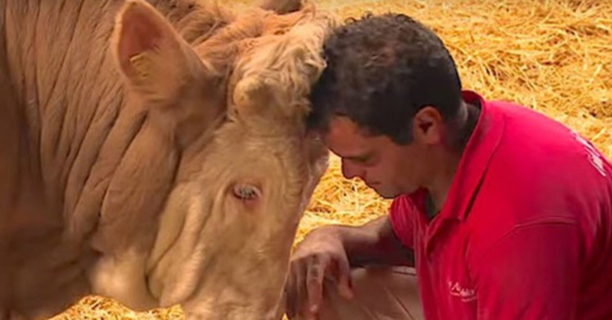 Bull Is Chained To A Rail For Life Until A Hero Comes Along And His Reaction Is Beautiful